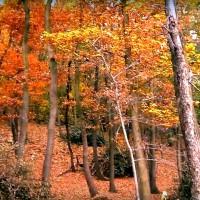 Beköszöntött az ősz